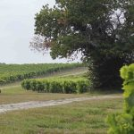 Vineyards at Le Maine Giraud