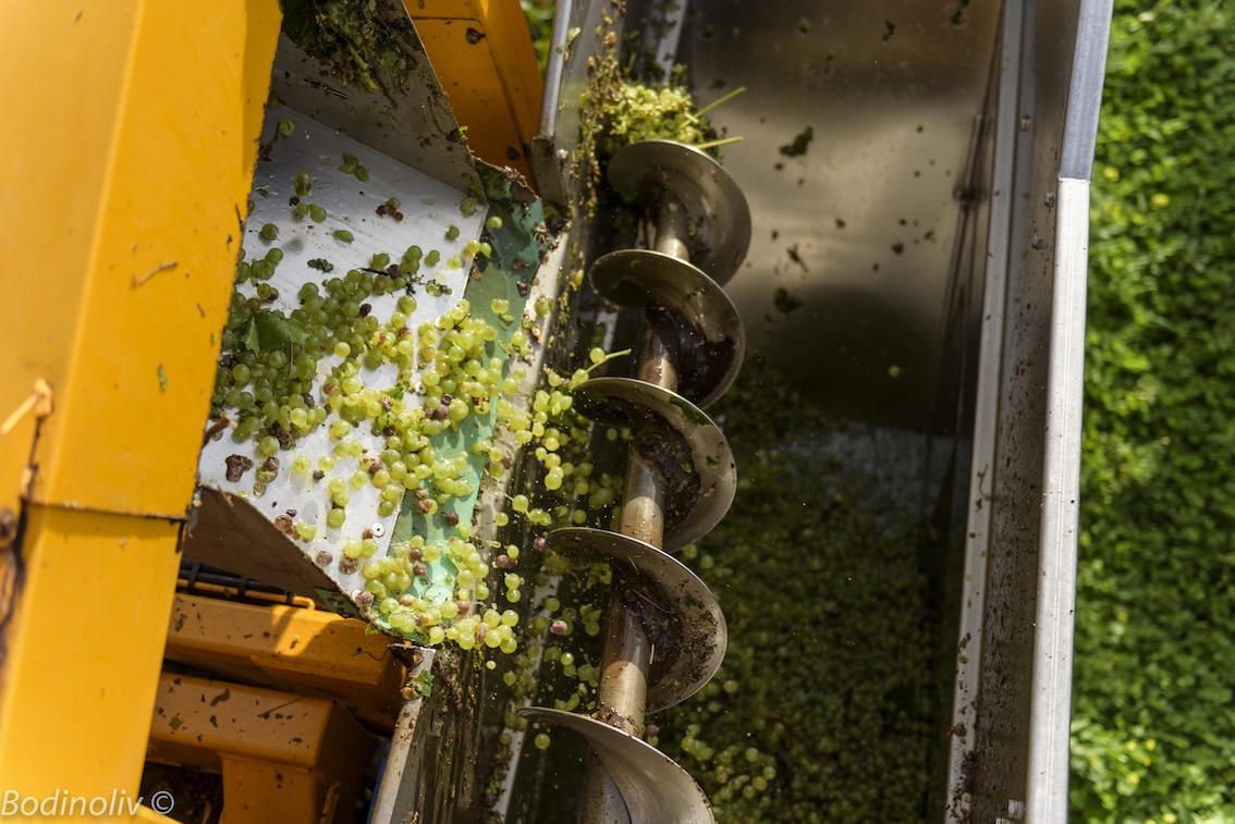 Harvest is over in Cognac: A complicated Year